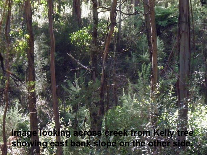 orientation of burman photos at sbc - Page 4 Bobs-view-across-creek-at-kelly-tree